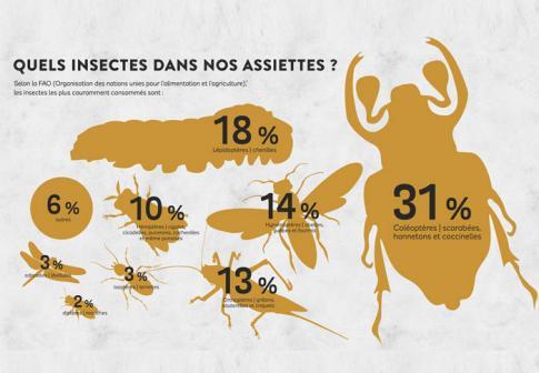 1257-Insectes-A