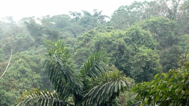 Forêt en Equateur © Maxppp