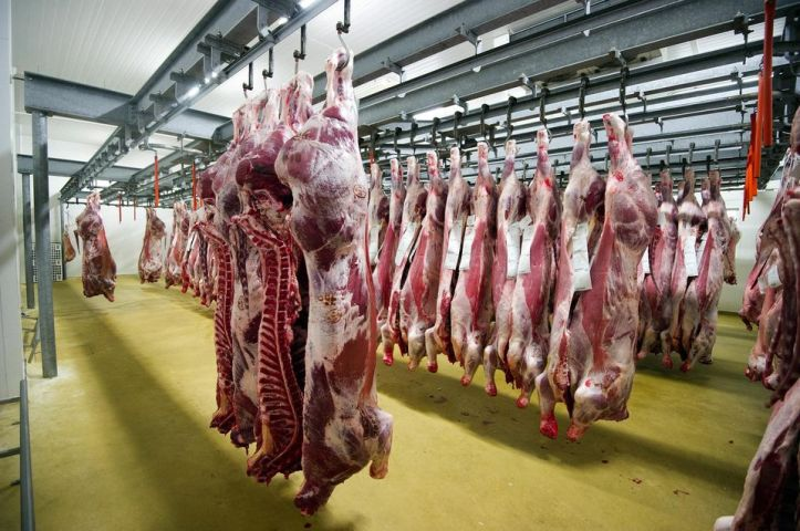 Des boeufs chez un grossiste en viande de Cholet, en septembre. Photo Jean-Sébastien Evrard. AFP